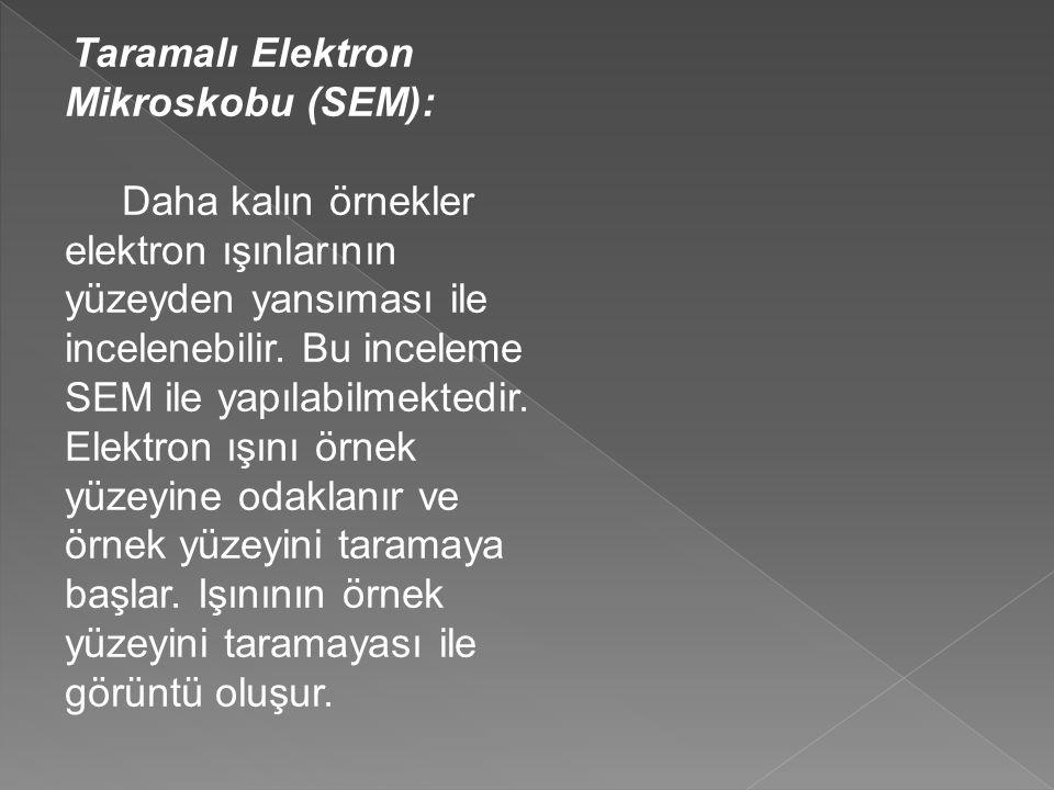 Taramalı Elektron Mikroskobu (SEM):