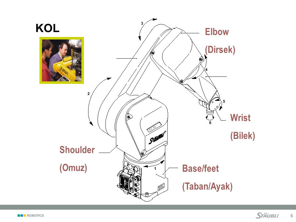 KOL Elbow (Dirsek) Wrist (Bilek) Shoulder (Omuz) Base/feet
