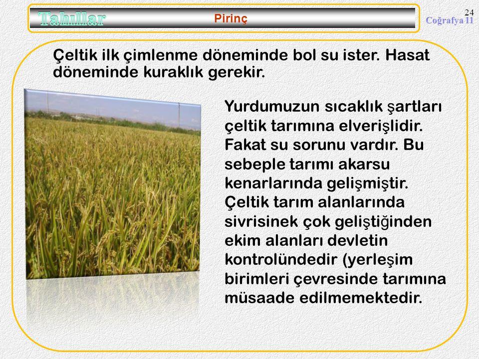 09.04.2017 Pirinç. Çeltik ilk çimlenme döneminde bol su ister. Hasat döneminde kuraklık gerekir.