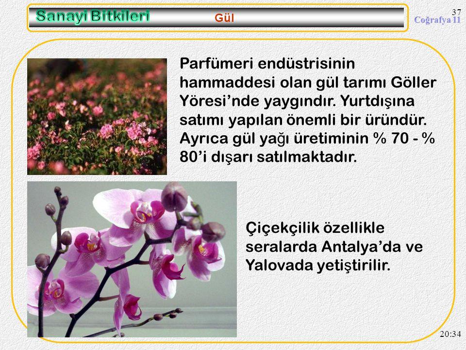 Çiçekçilik özellikle seralarda Antalya'da ve Yalovada yetiştirilir.