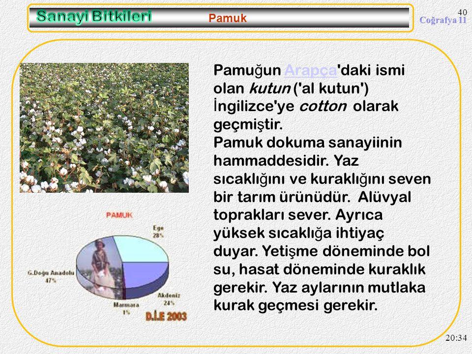 09.04.2017 Sanayi Bitkileri. Pamuk. Pamuğun Arapça daki ismi olan kutun ( al kutun ) İngilizce ye cotton olarak geçmiştir.