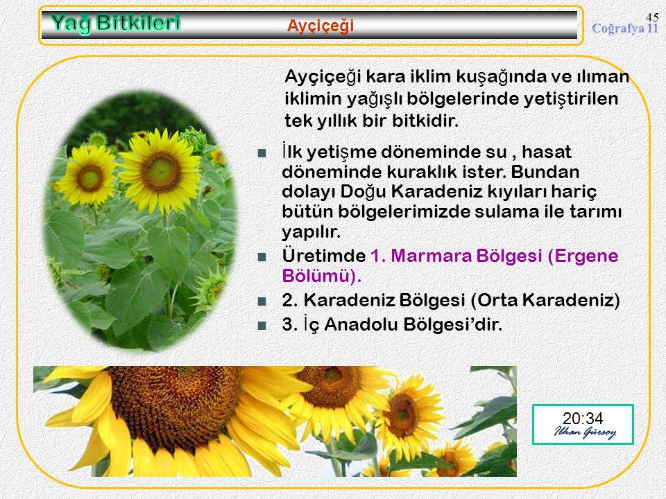09.04.2017 Yağ Bitkileri. Ayçiçeği. Ayçiçeği kara iklim kuşağında ve ılıman iklimin yağışlı bölgelerinde yetiştirilen tek yıllık bir bitkidir.