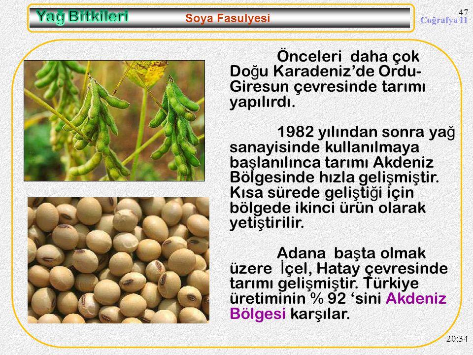 09.04.2017 Yağ Bitkileri. Soya Fasulyesi. Önceleri daha çok Doğu Karadeniz'de Ordu-Giresun çevresinde tarımı yapılırdı.