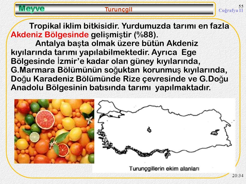 09.04.2017 Meyve. Turunçgil. Tropikal iklim bitkisidir. Yurdumuzda tarımı en fazla Akdeniz Bölgesinde gelişmiştir (%88).