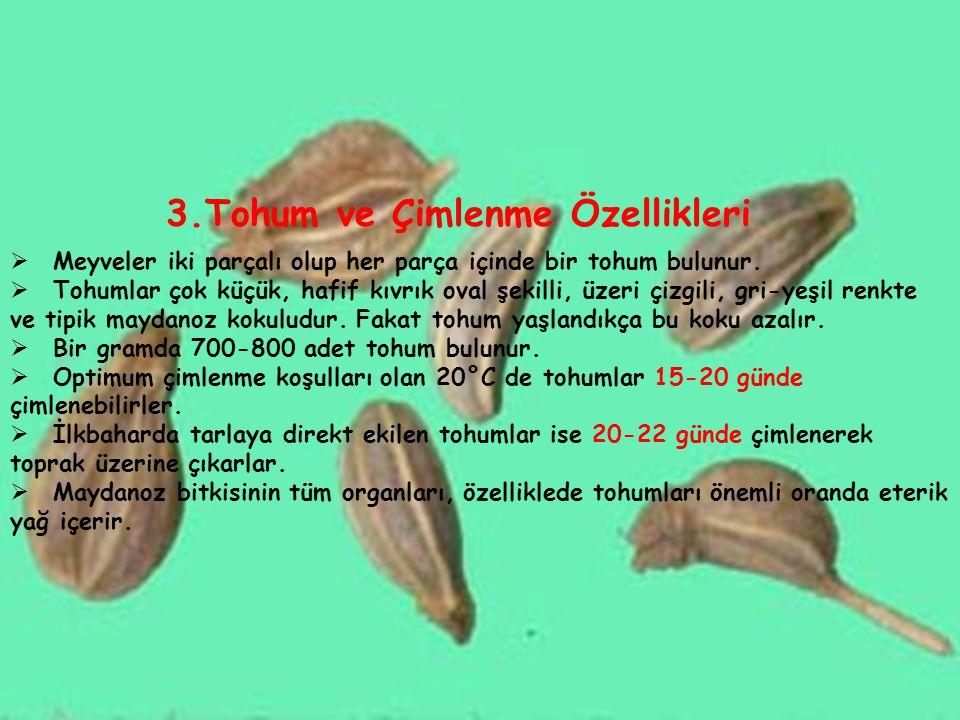 3.Tohum ve Çimlenme Özellikleri