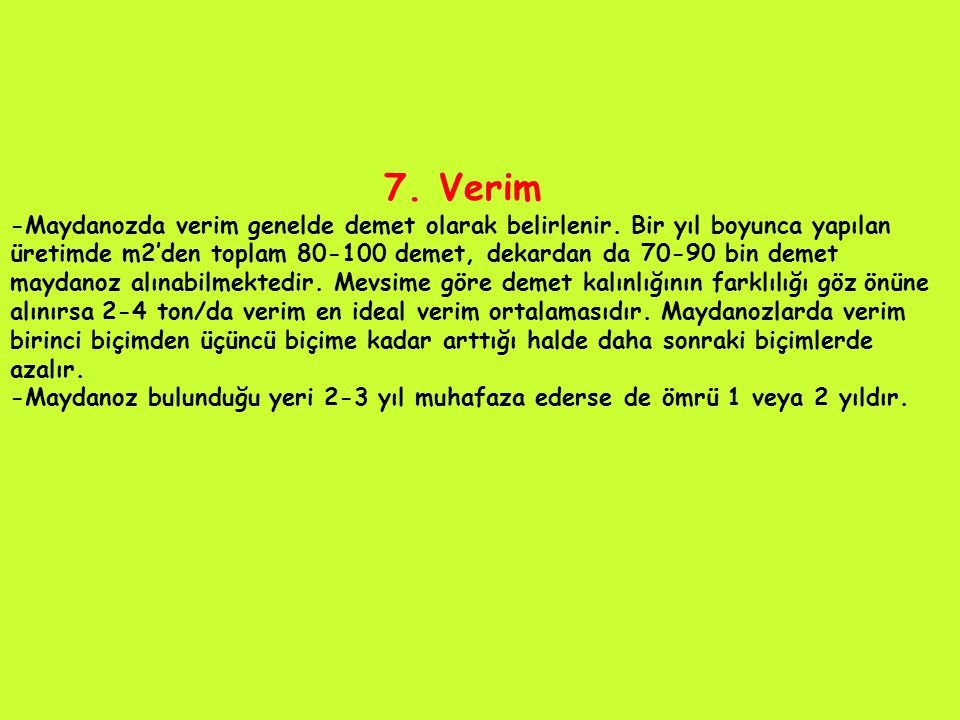 7. Verim -Maydanozda verim genelde demet olarak belirlenir