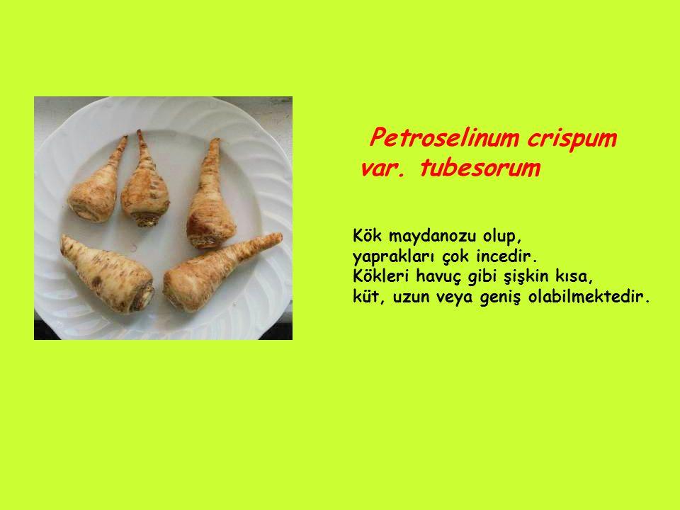 Petroselinum crispum var. tubesorum