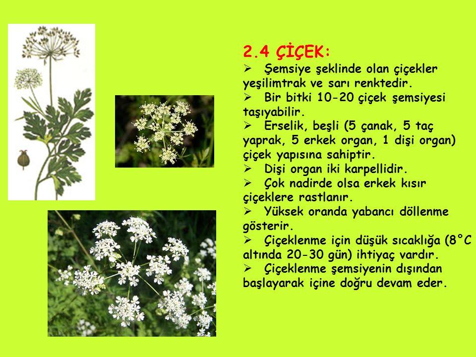 2.4 ÇİÇEK: Şemsiye şeklinde olan çiçekler yeşilimtrak ve sarı renktedir. Bir bitki 10-20 çiçek şemsiyesi taşıyabilir.