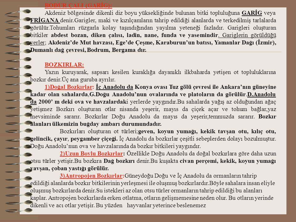 BODUR ÇALI (GARİG):