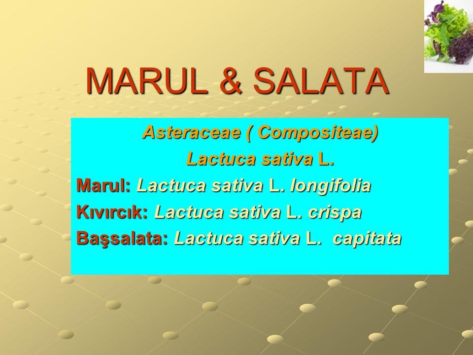 Asteraceae ( Compositeae)