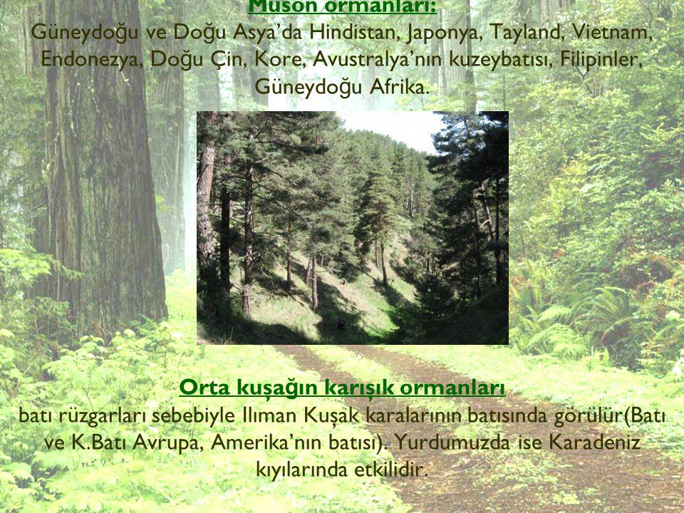 Muson ormanları: Güneydoğu ve Doğu Asya'da Hindistan, Japonya, Tayland, Vietnam, Endonezya, Doğu Çin, Kore, Avustralya'nın kuzeybatısı, Filipinler, Güneydoğu Afrika.