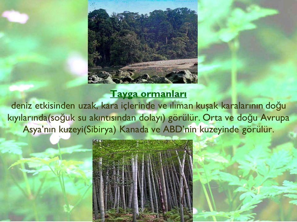 Tayga ormanları deniz etkisinden uzak, kara içlerinde ve ılıman kuşak karalarının doğu kıyılarında(soğuk su akıntısından dolayı) görülür.