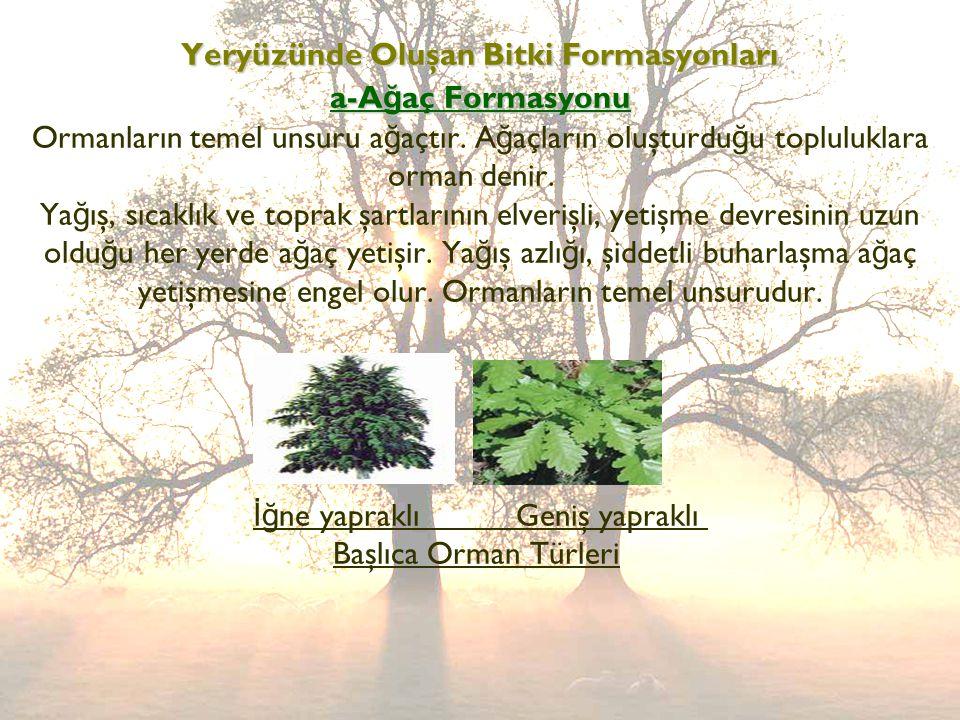 Yeryüzünde Oluşan Bitki Formasyonları a-Ağaç Formasyonu Ormanların temel unsuru ağaçtır.