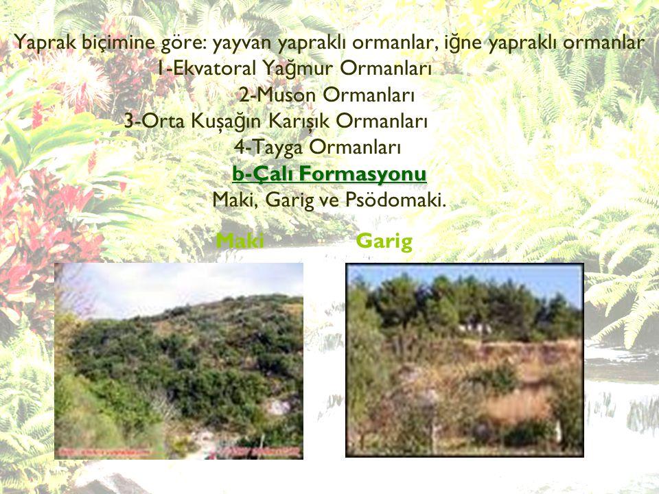 Yaprak biçimine göre: yayvan yapraklı ormanlar, iğne yapraklı ormanlar 1-Ekvatoral Yağmur Ormanları 2-Muson Ormanları 3-Orta Kuşağın Karışık Ormanları 4-Tayga Ormanları b-Çalı Formasyonu Maki, Garig ve Psödomaki.