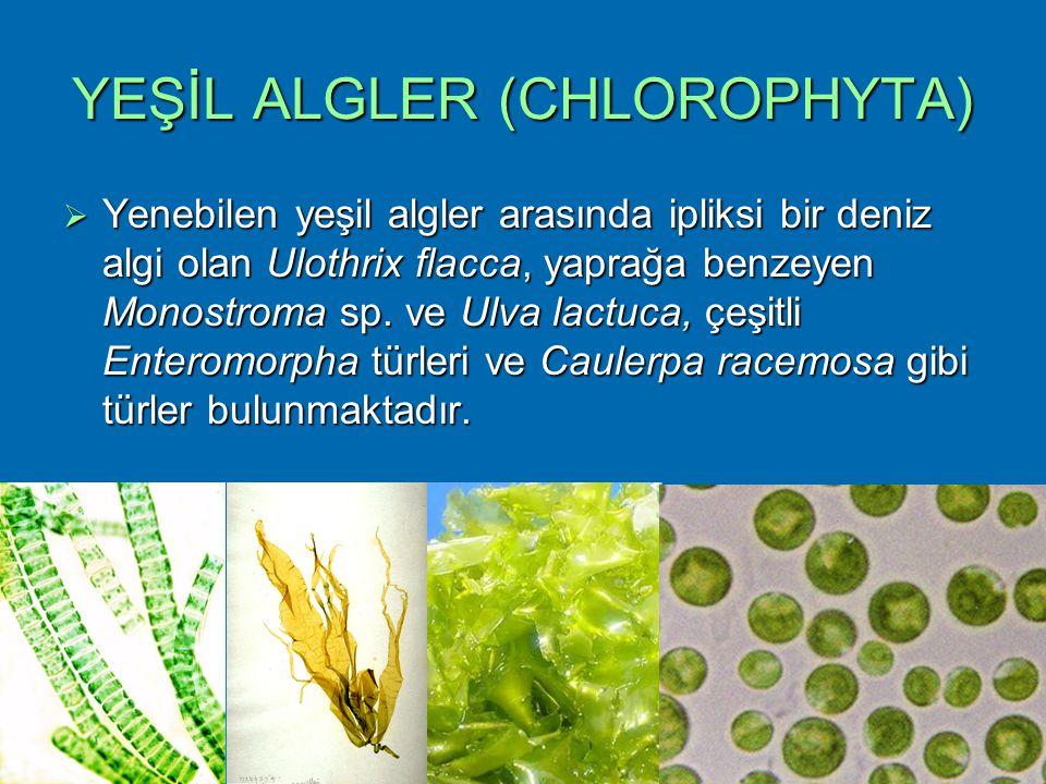 YEŞİL ALGLER (CHLOROPHYTA)