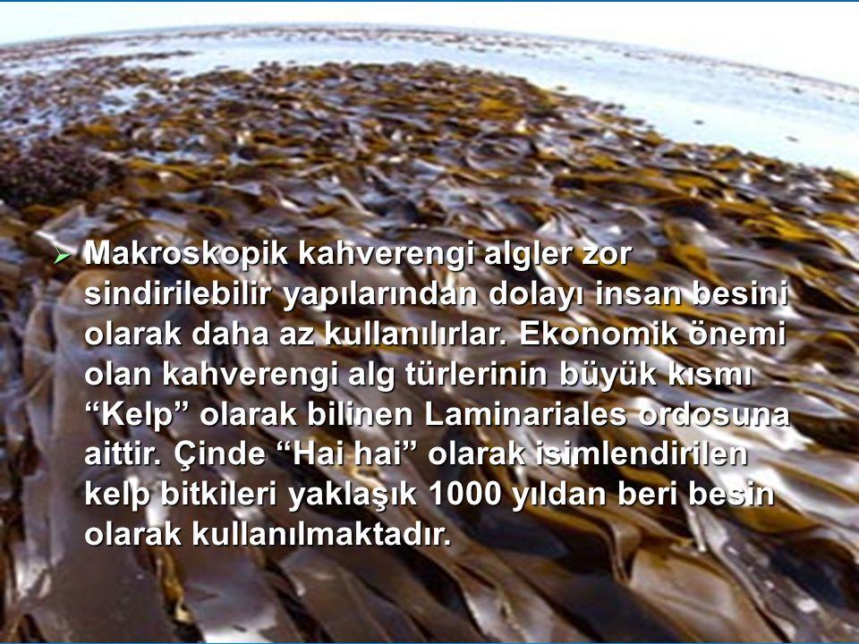 Makroskopik kahverengi algler zor sindirilebilir yapılarından dolayı insan besini olarak daha az kullanılırlar.
