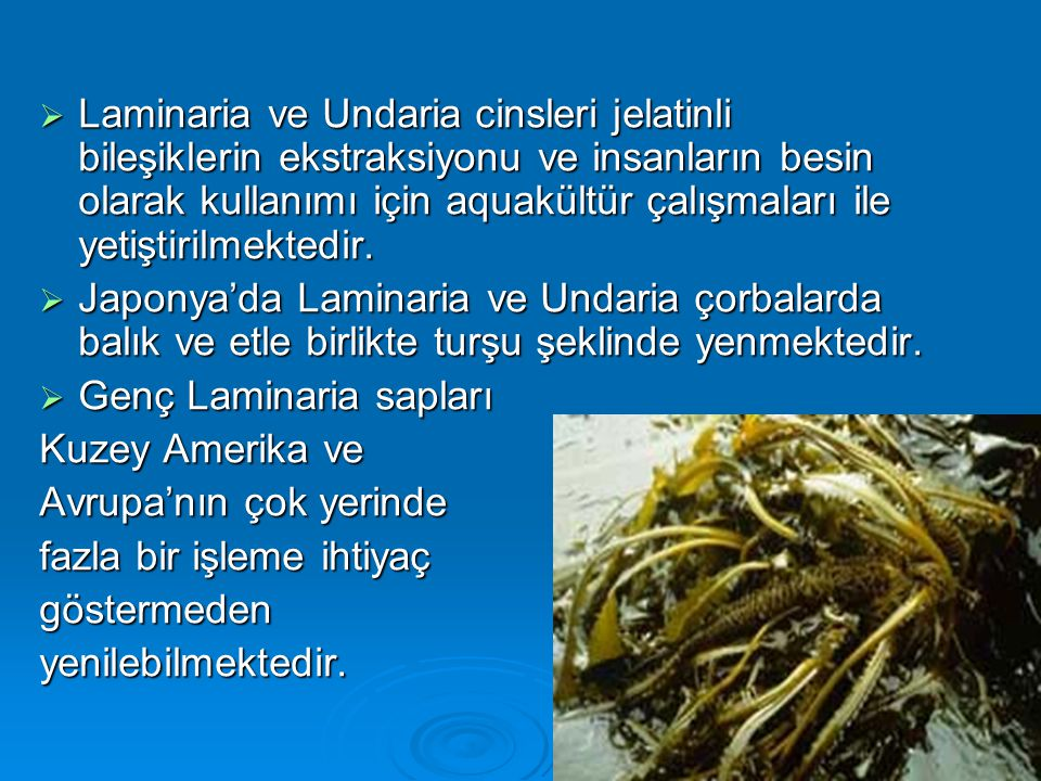 Laminaria ve Undaria cinsleri jelatinli bileşiklerin ekstraksiyonu ve insanların besin olarak kullanımı için aquakültür çalışmaları ile yetiştirilmektedir.