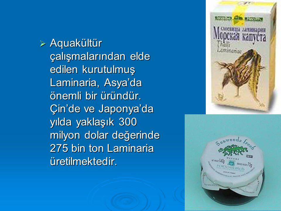 Aquakültür çalışmalarından elde edilen kurutulmuş Laminaria, Asya'da önemli bir üründür.