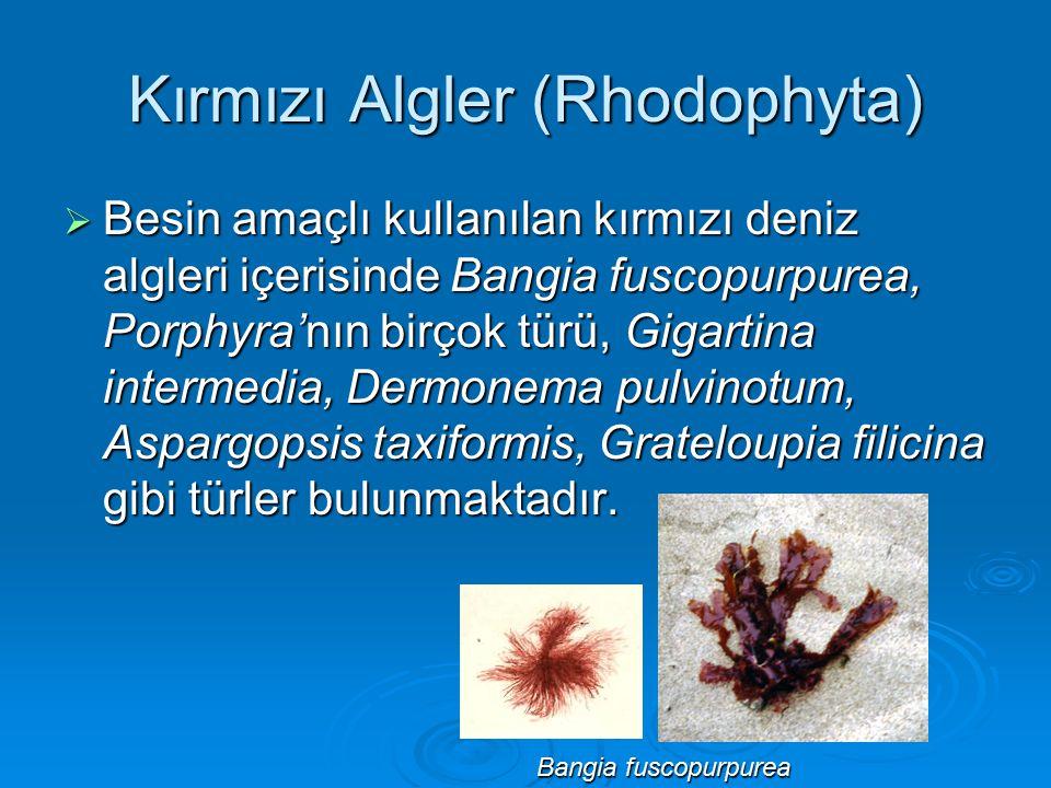 Kırmızı Algler (Rhodophyta)