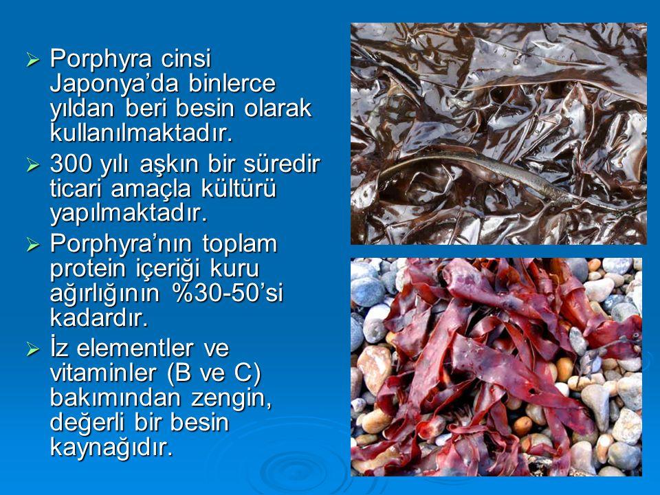 Porphyra cinsi Japonya'da binlerce yıldan beri besin olarak kullanılmaktadır.