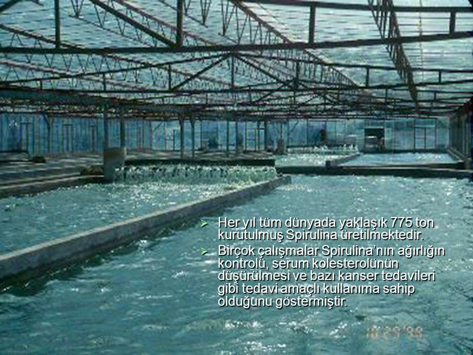 Her yıl tüm dünyada yaklaşık 775 ton kurutulmuş Spirulina üretilmektedir.