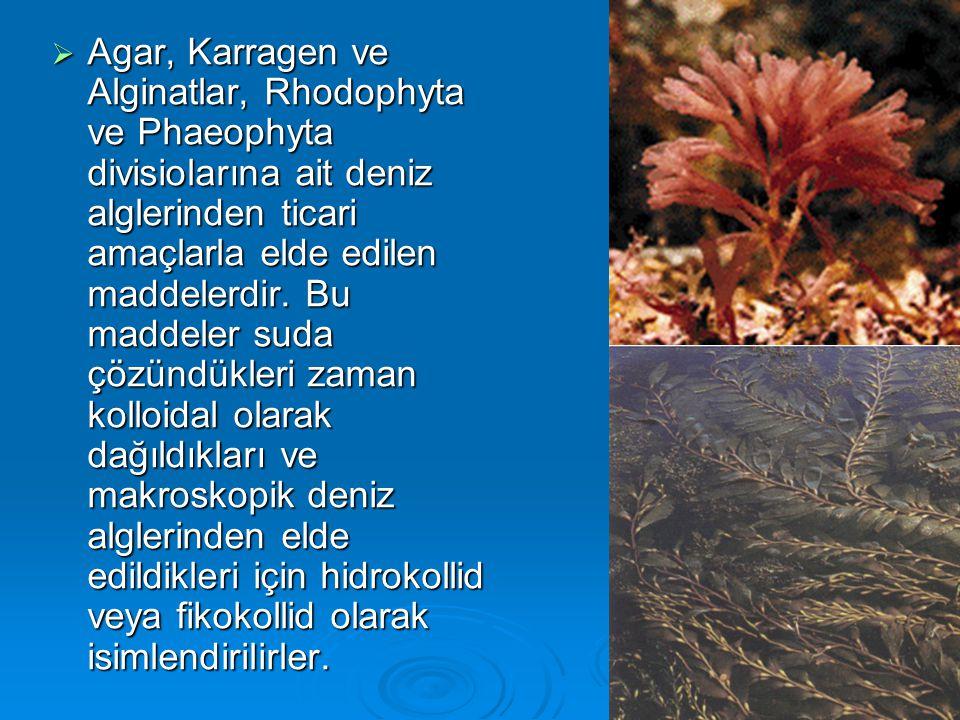Agar, Karragen ve Alginatlar, Rhodophyta ve Phaeophyta divisiolarına ait deniz alglerinden ticari amaçlarla elde edilen maddelerdir.