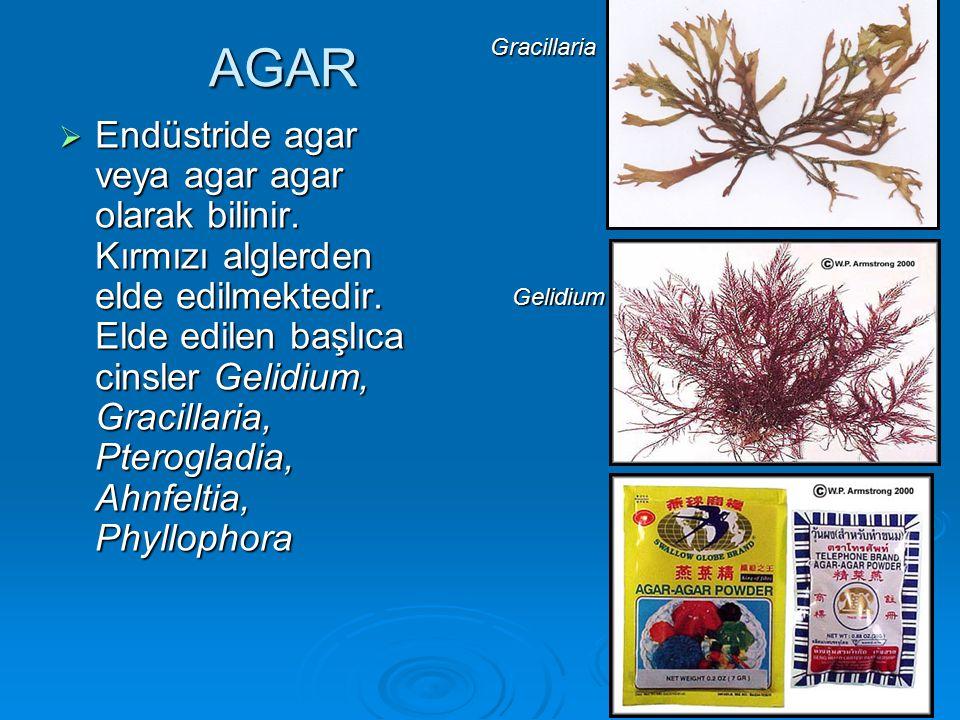 AGAR Gracillaria.