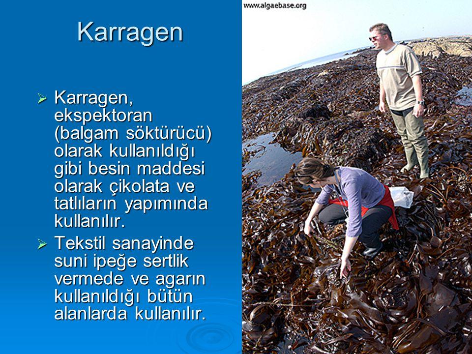 Karragen Karragen, ekspektoran (balgam söktürücü) olarak kullanıldığı gibi besin maddesi olarak çikolata ve tatlıların yapımında kullanılır.