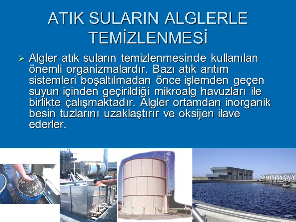 ATIK SULARIN ALGLERLE TEMİZLENMESİ