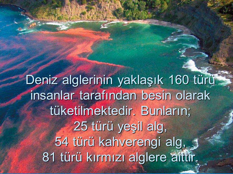 Deniz alglerinin yaklaşık 160 türü insanlar tarafından besin olarak tüketilmektedir.
