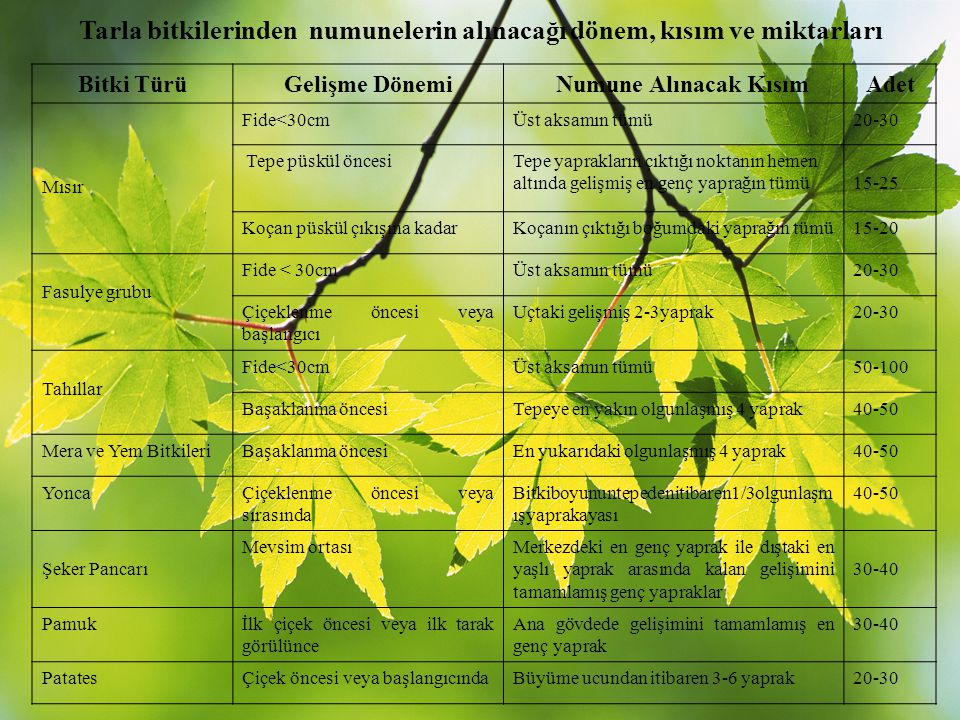 Tarla bitkilerinden numunelerin alınacağı dönem, kısım ve miktarları