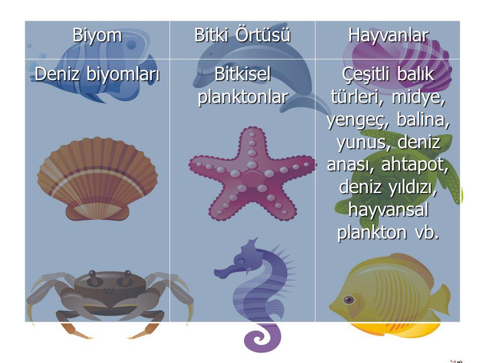 Biyom Bitki Örtüsü. Hayvanlar. Deniz biyomları. Bitkisel planktonlar.