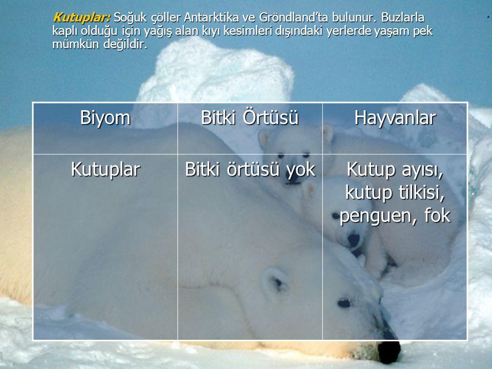Kutup ayısı, kutup tilkisi, penguen, fok