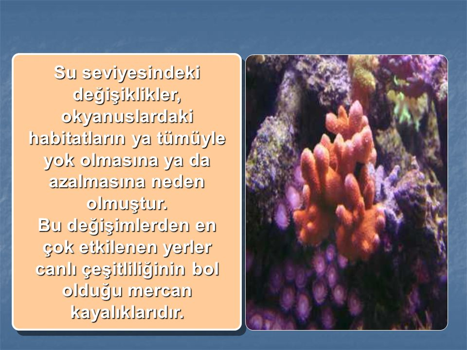 Su seviyesindeki değişiklikler, okyanuslardaki habitatların ya tümüyle yok olmasına ya da azalmasına neden olmuştur.