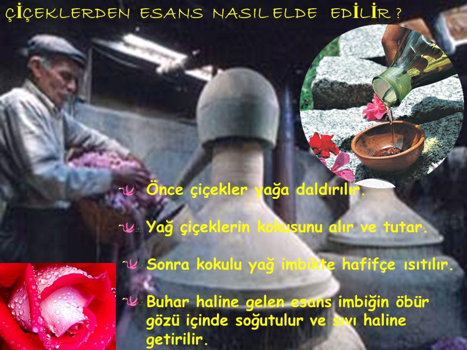 ÇİÇEKLERDEN ESANS NASIL ELDE EDİLİR
