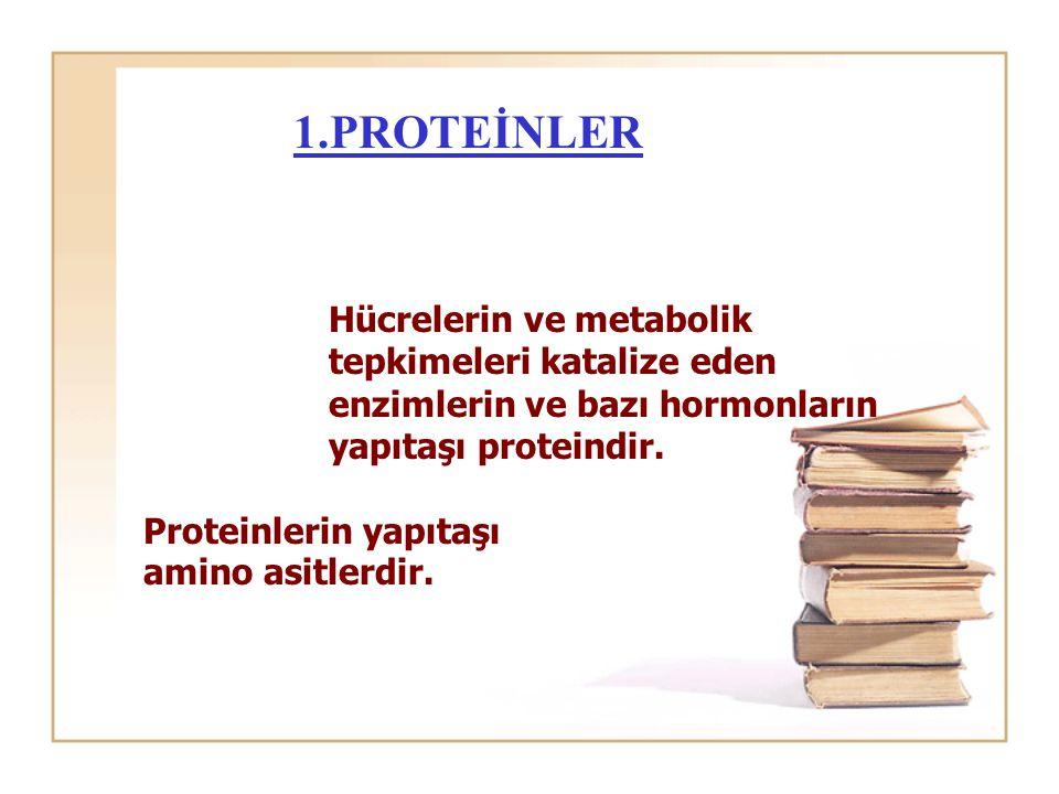 1.PROTEİNLER Hücrelerin ve metabolik tepkimeleri katalize eden