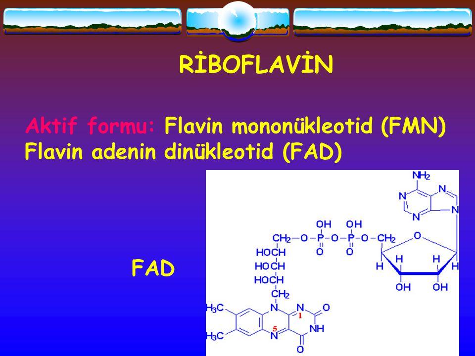RİBOFLAVİN Aktif formu: Flavin mononükleotid (FMN)