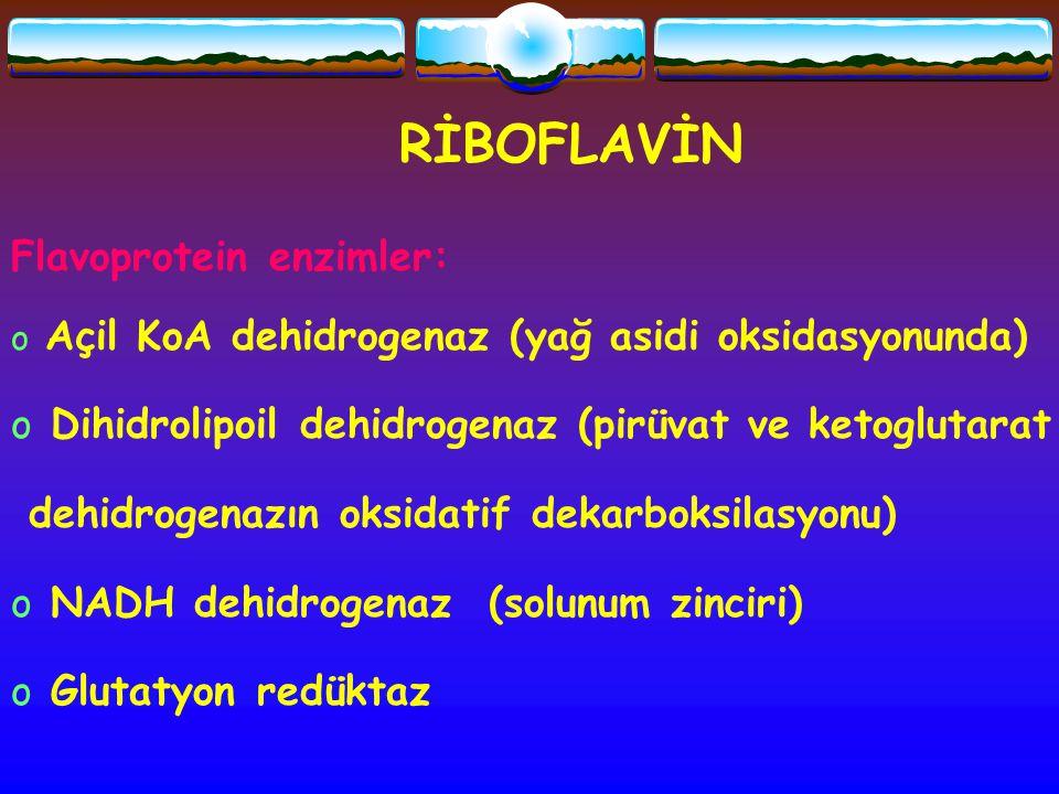 RİBOFLAVİN Flavoprotein enzimler: