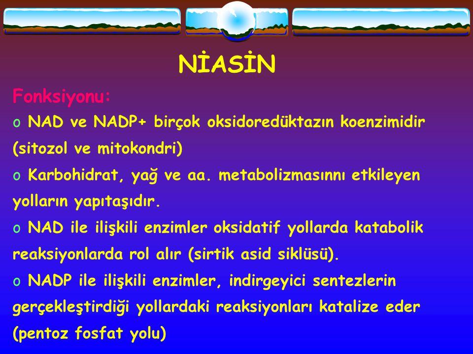 NİASİN Fonksiyonu: NAD ve NADP+ birçok oksidoredüktazın koenzimidir