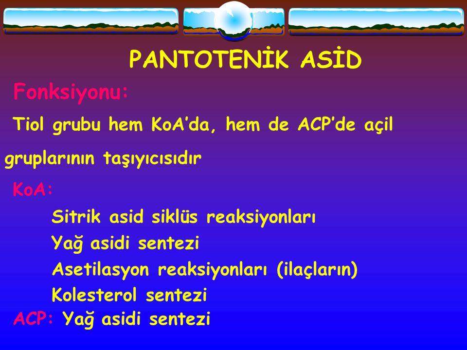 PANTOTENİK ASİD Fonksiyonu: