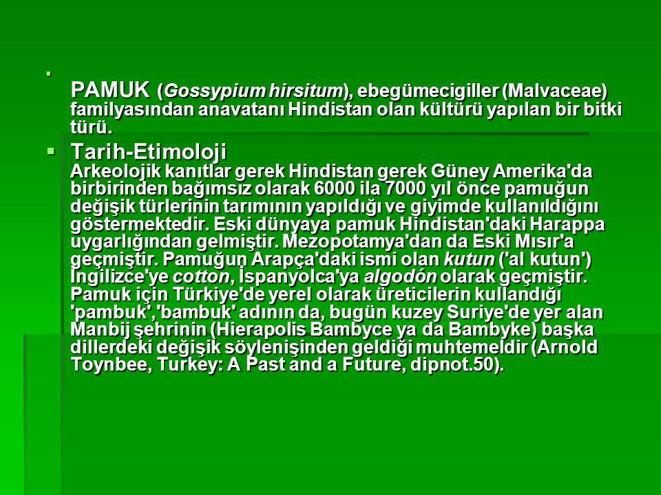 PAMUK (Gossypium hirsitum), ebegümecigiller (Malvaceae) familyasından anavatanı Hindistan olan kültürü yapılan bir bitki türü.