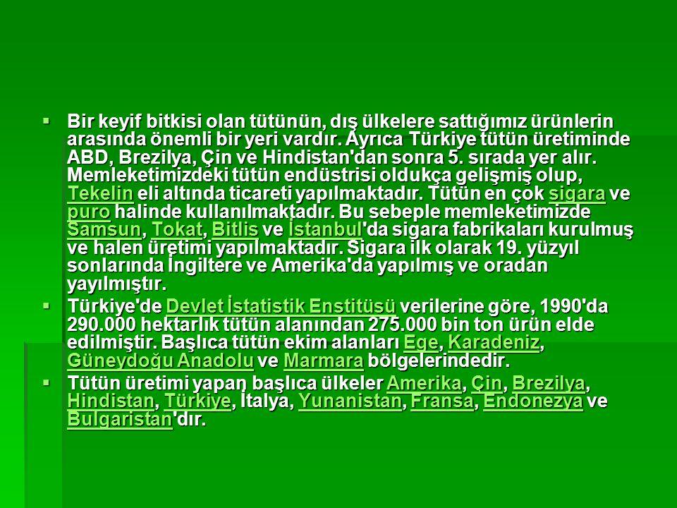 Bir keyif bitkisi olan tütünün, dış ülkelere sattığımız ürünlerin arasında önemli bir yeri vardır. Ayrıca Türkiye tütün üretiminde ABD, Brezilya, Çin ve Hindistan dan sonra 5. sırada yer alır. Memleketimizdeki tütün endüstrisi oldukça gelişmiş olup, Tekelin eli altında ticareti yapılmaktadır. Tütün en çok sigara ve puro halinde kullanılmaktadır. Bu sebeple memleketimizde Samsun, Tokat, Bitlis ve İstanbul da sigara fabrikaları kurulmuş ve halen üretimi yapılmaktadır. Sigara ilk olarak 19. yüzyıl sonlarında İngiltere ve Amerika da yapılmış ve oradan yayılmıştır.