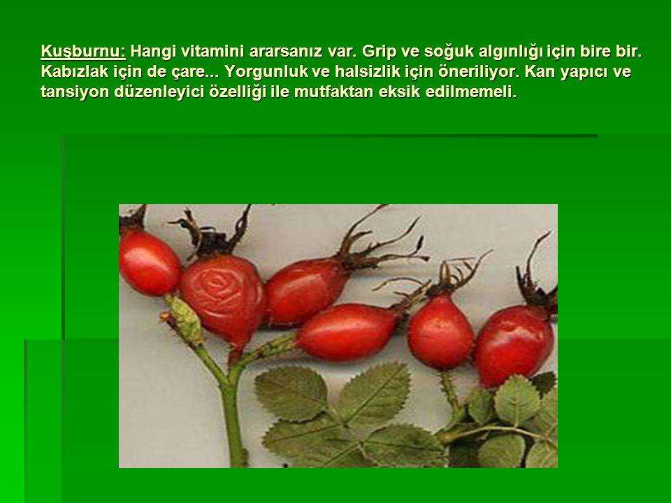 Kuşburnu: Hangi vitamini ararsanız var
