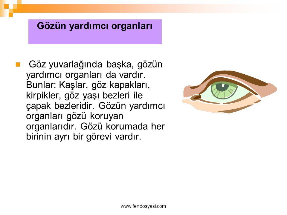 Gözün yardımcı organları