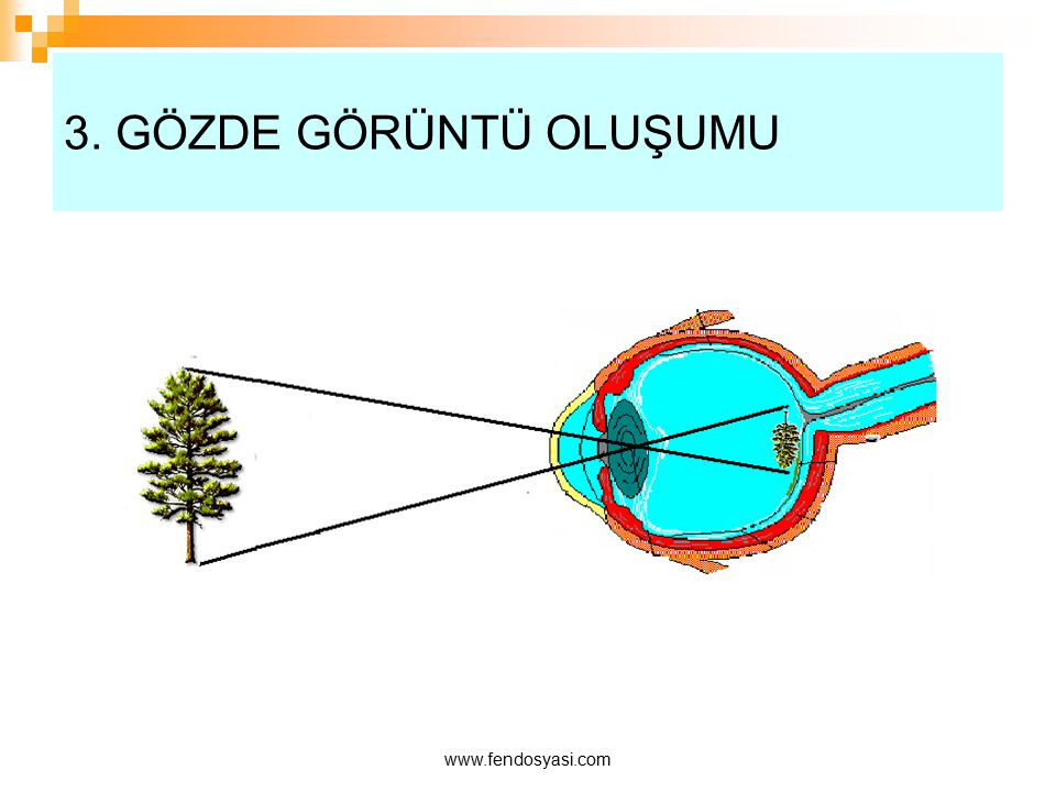 3. GÖZDE GÖRÜNTÜ OLUŞUMU www.fendosyasi.com