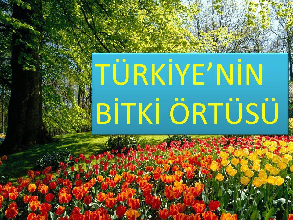 TÜRKİYE'NİN BİTKİ ÖRTÜSÜ
