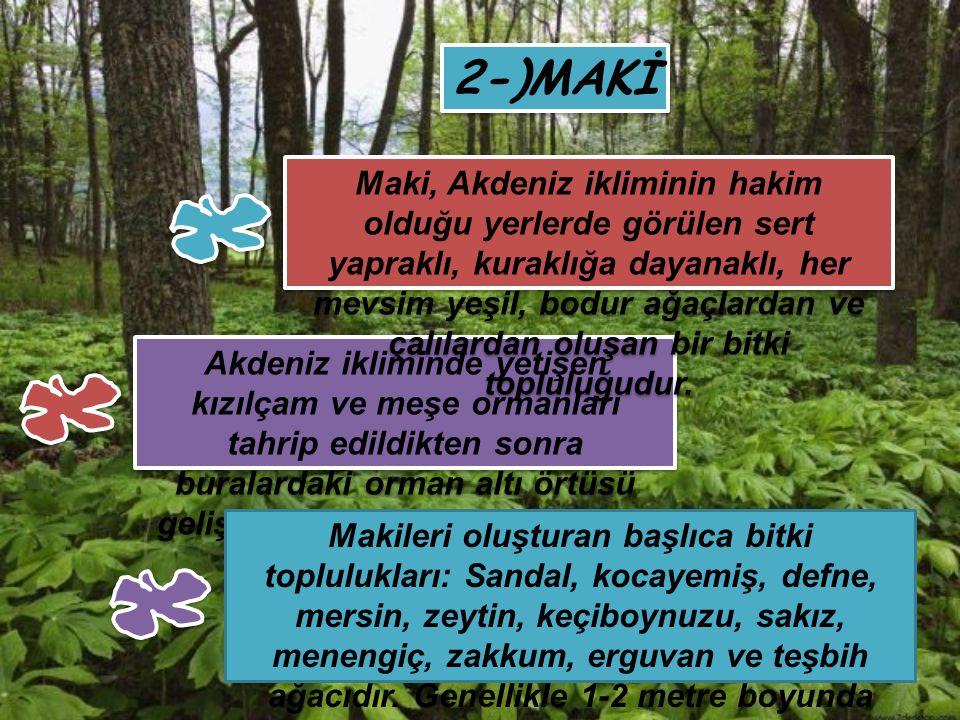 2-)MAKİ