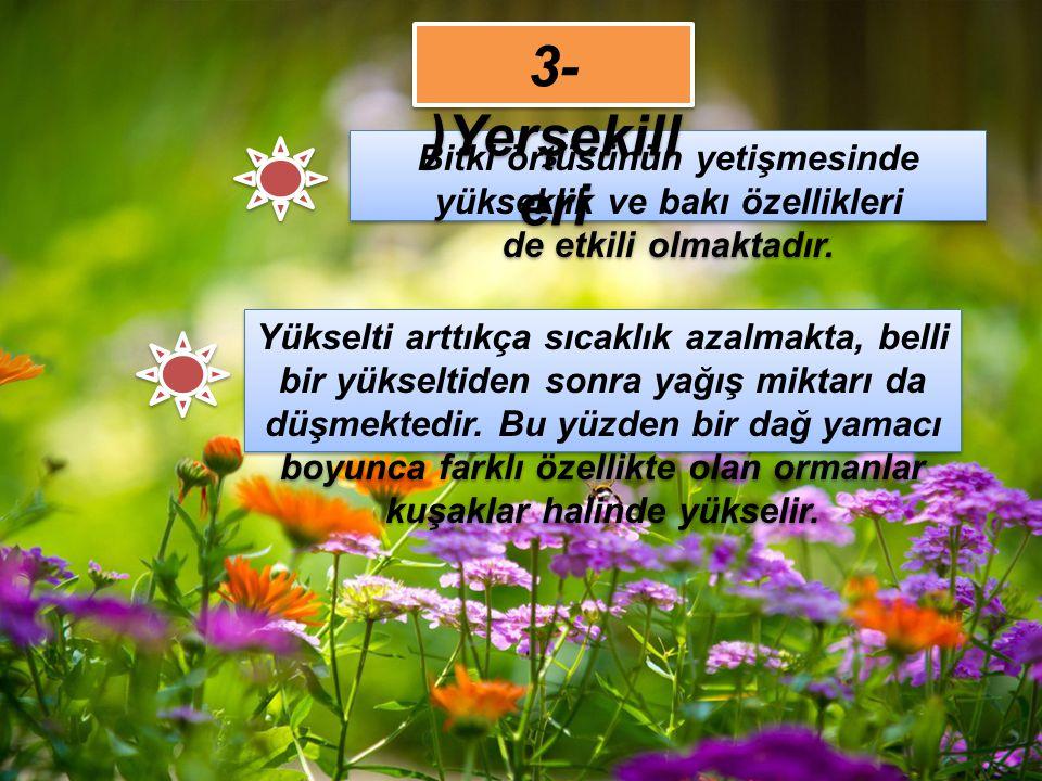 3-)Yerşekilleri Bitki örtüsünün yetişmesinde yükseklik ve bakı özellikleri de etkili olmaktadır.
