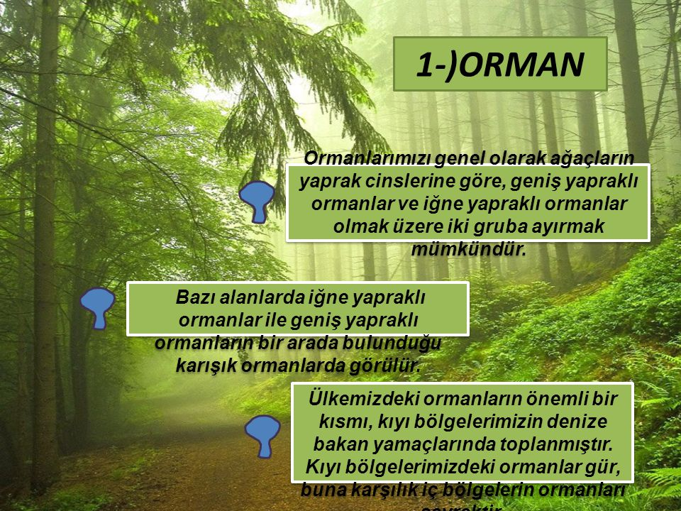 1-)ORMAN