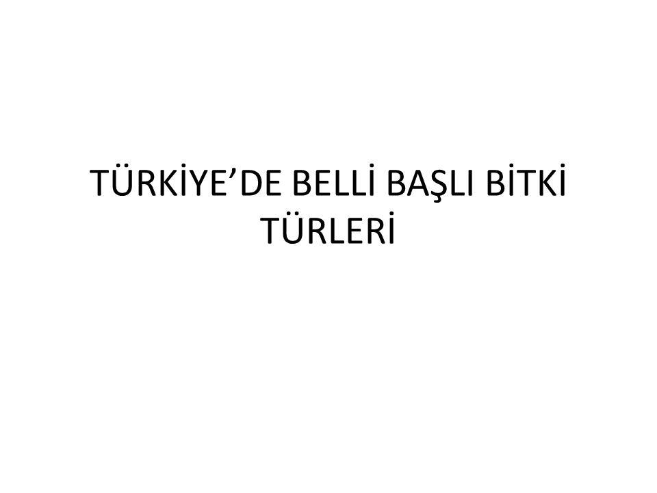 TÜRKİYE'DE BELLİ BAŞLI BİTKİ TÜRLERİ